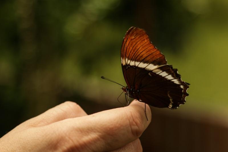 mariposa-2382020.jpg